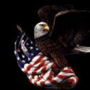 Bald Eagle USA Etc