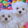 Ball pit doggies