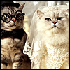 Groom and Bride cats 30 11