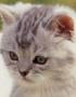 Kitten02
