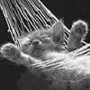 Little Sleeping Cat