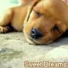 sweet dreams dog